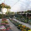 Antal-Liget Kertészeti Áruda