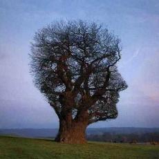 Hársfa Pszicho Műhely